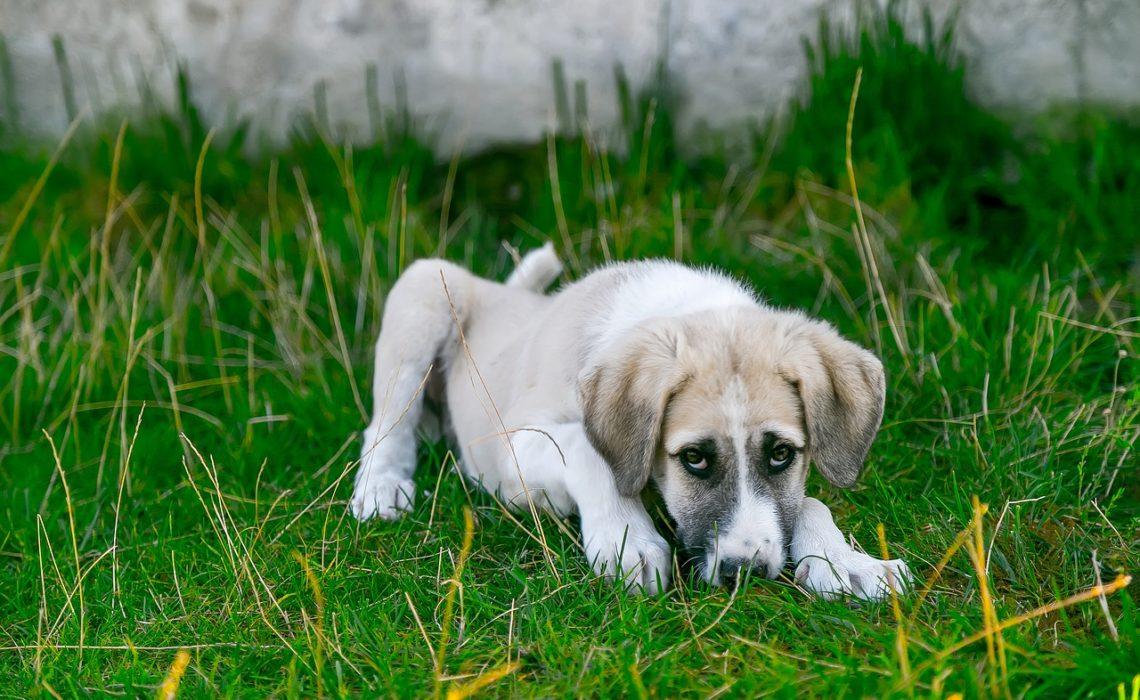 Que doit on faire si son chien a de la fièvre