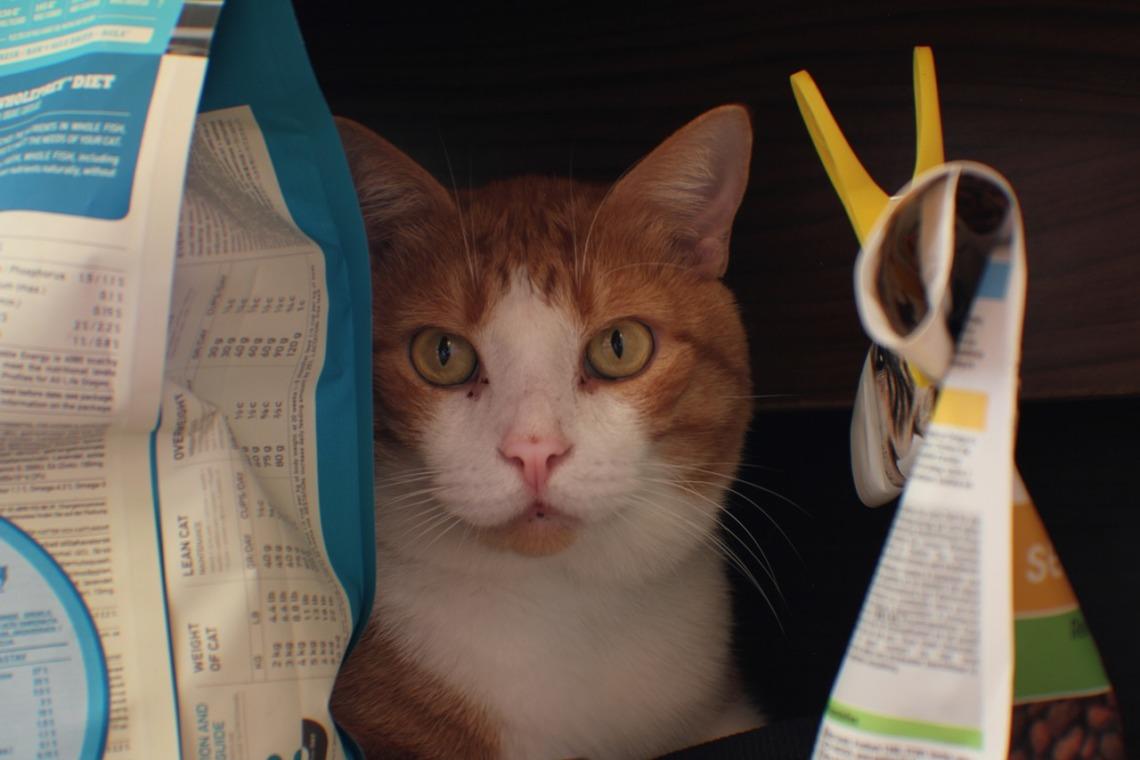 humide protéine chat