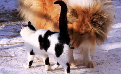 Vermifuger son chien